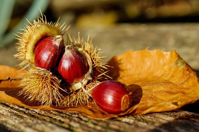 cosi-tabellini-italian-pewter-sweet-chestnut-4